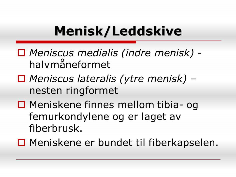 Menisk/Leddskive Meniscus medialis (indre menisk) -halvmåneformet
