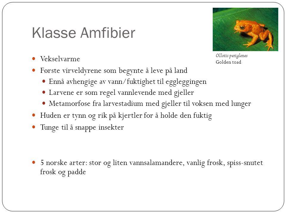 Klasse Amfibier Vekselvarme