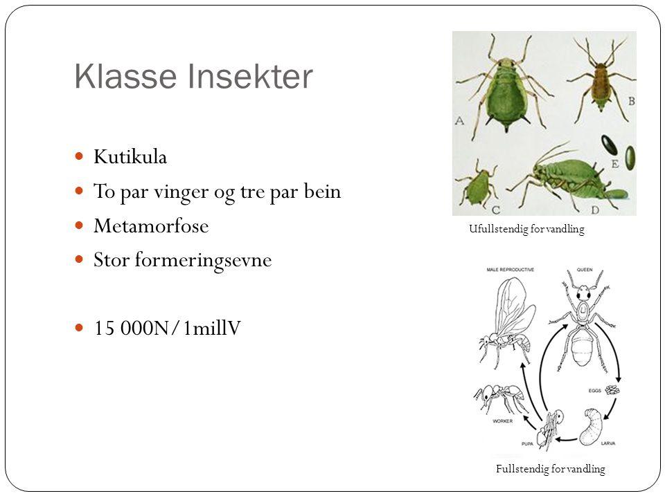 Klasse Insekter Kutikula To par vinger og tre par bein Metamorfose