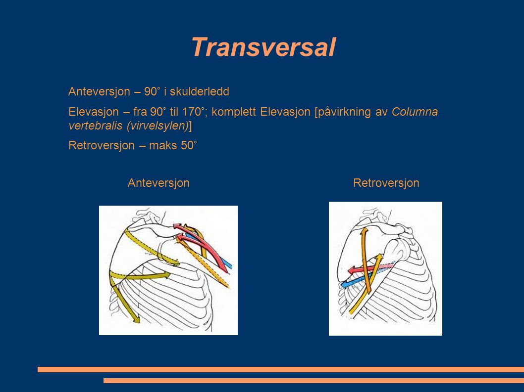 Transversal Anteversjon – 90° i skulderledd
