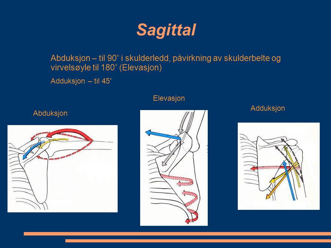 Sagittal Abduksjon – til 90° i skulderledd, påvirkning av skulderbelte og virvelsøyle til 180° (Elevasjon)