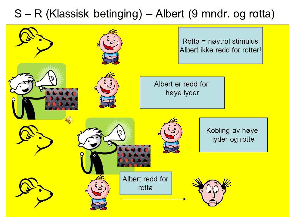 S – R (Klassisk betinging) – Albert (9 mndr. og rotta)