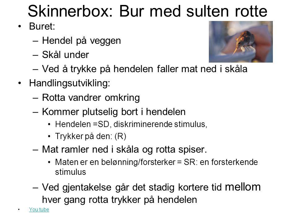 Skinnerbox: Bur med sulten rotte