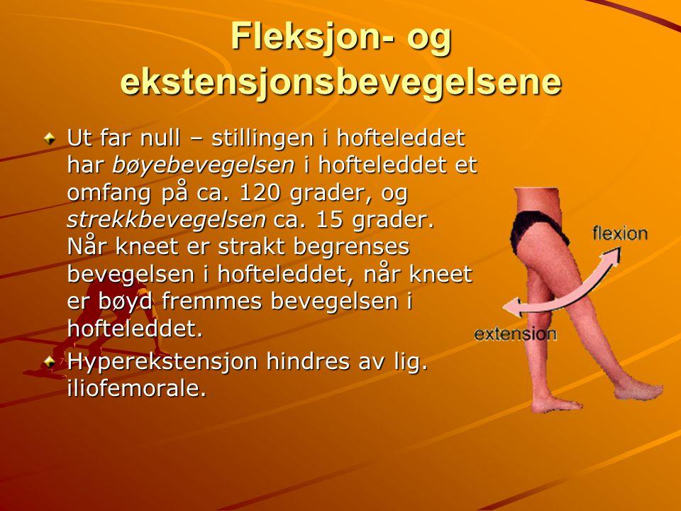 Fleksjon- og ekstensjonsbevegelsene