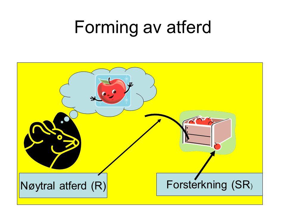 Forming av atferd Nøytral atferd (R) Forsterkning (SR)