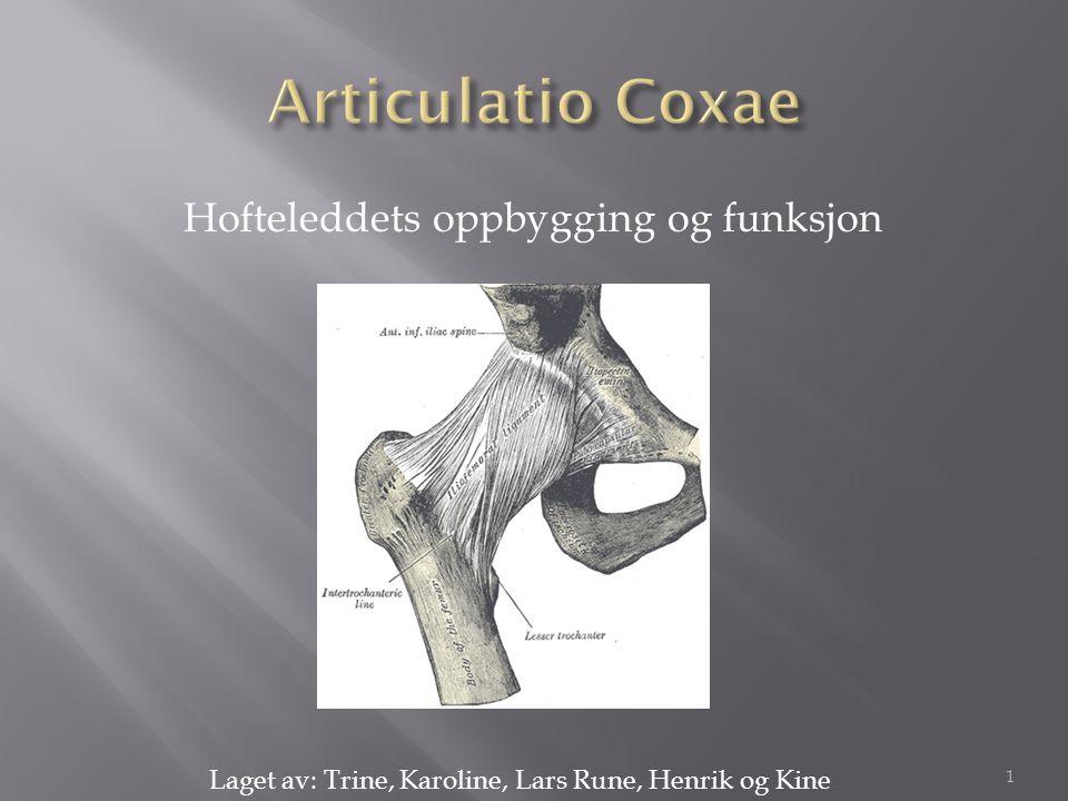 Articulatio Coxae Hofteleddets oppbygging og funksjon