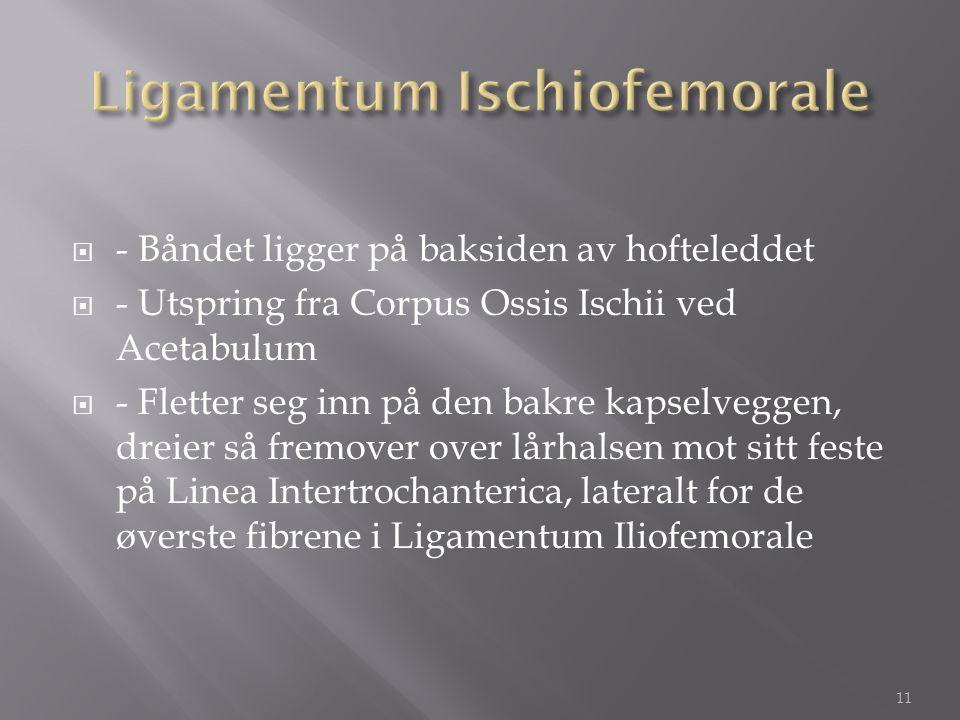 Ligamentum Ischiofemorale