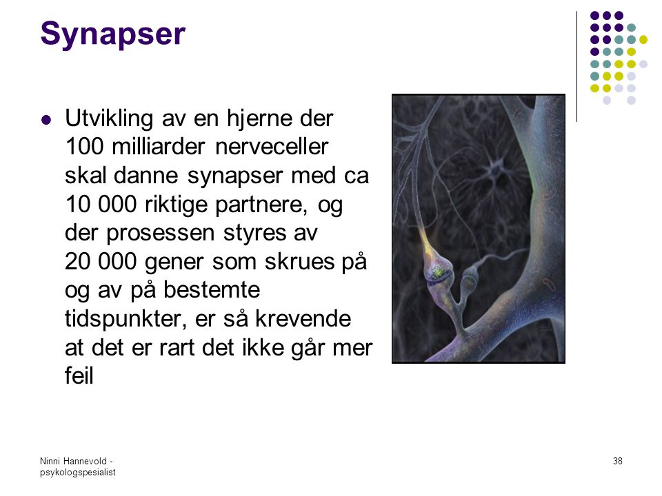 Synapser
