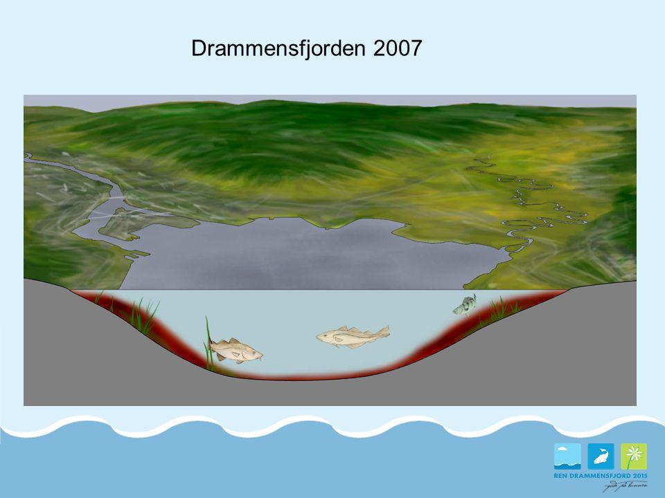 Drammensfjorden 2007 Nåværende miljøtilstand