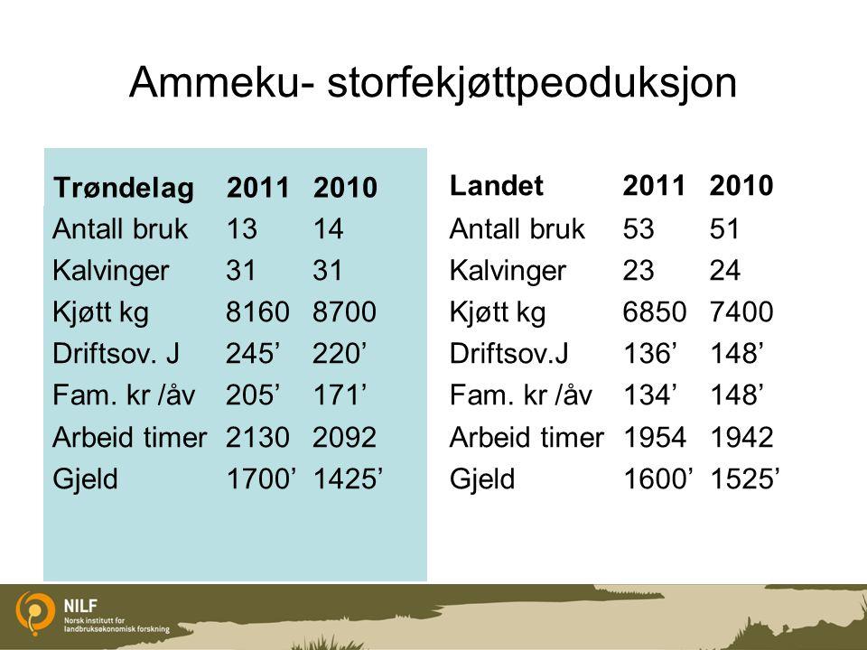 Ammeku- storfekjøttpeoduksjon