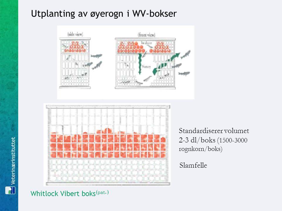 Utplanting av øyerogn i WV-bokser