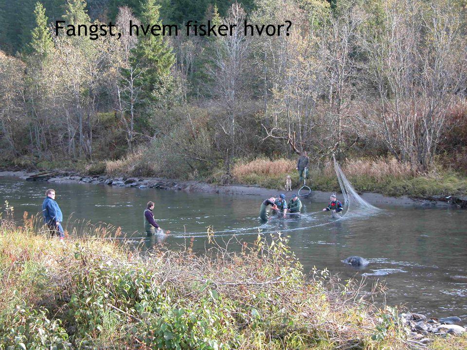 Fangst, hvem fisker hvor