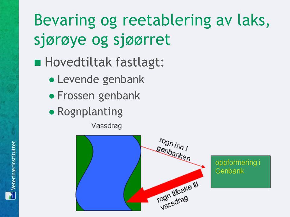 Bevaring og reetablering av laks, sjørøye og sjøørret