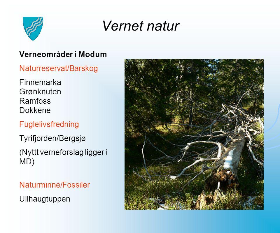 Vernet natur Verneområder i Modum Naturreservat/Barskog