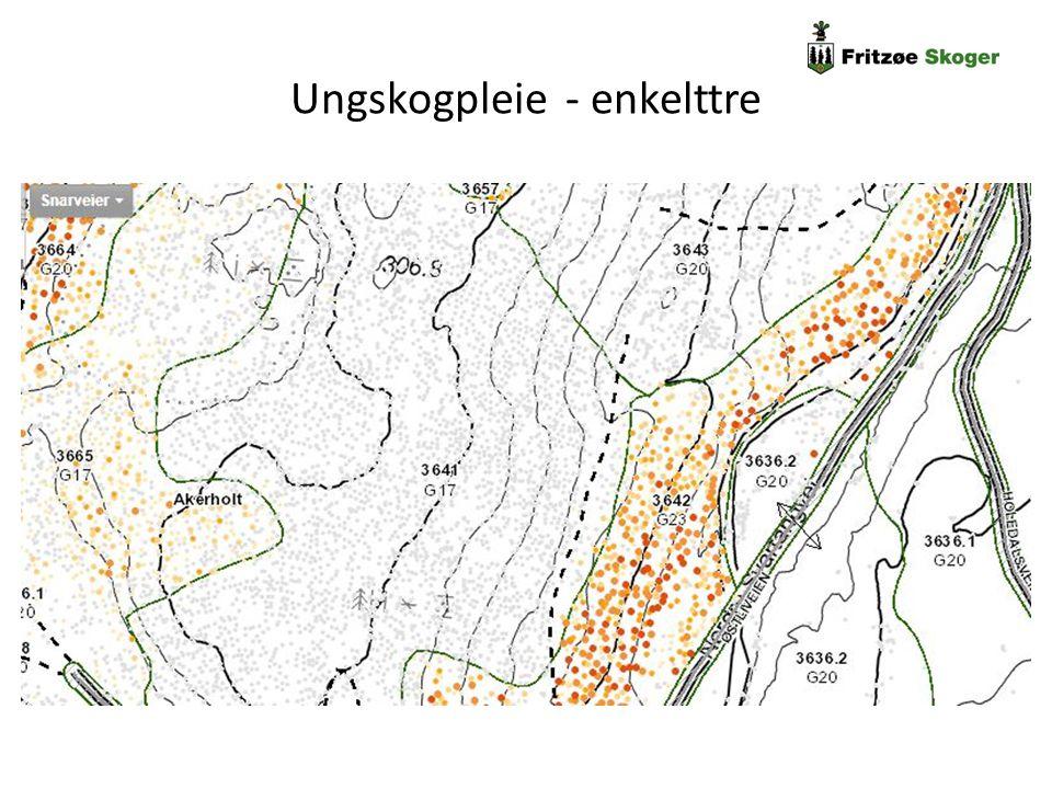 Ungskogpleie - enkelttre