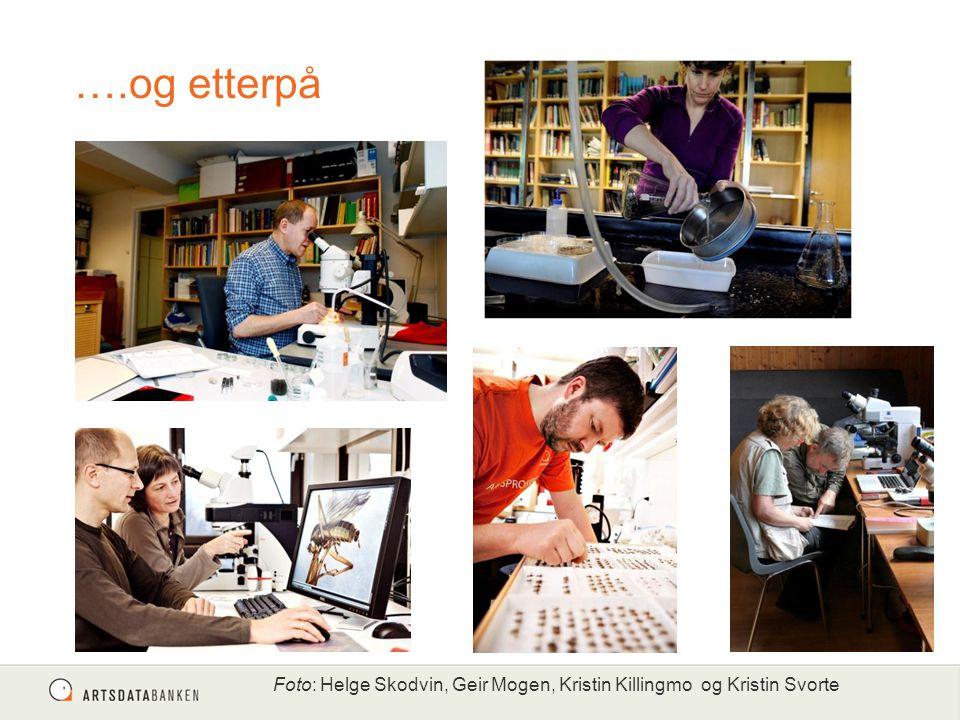 ….og etterpå Foto: Helge Skodvin, Geir Mogen, Kristin Killingmo og Kristin Svorte