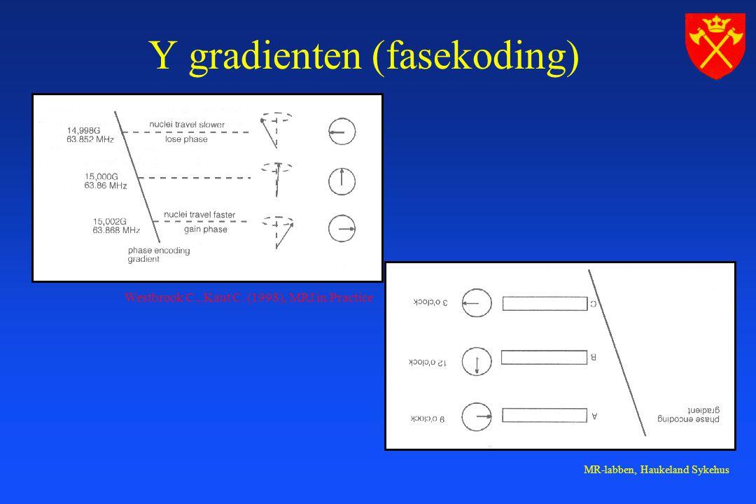 Y gradienten (fasekoding)
