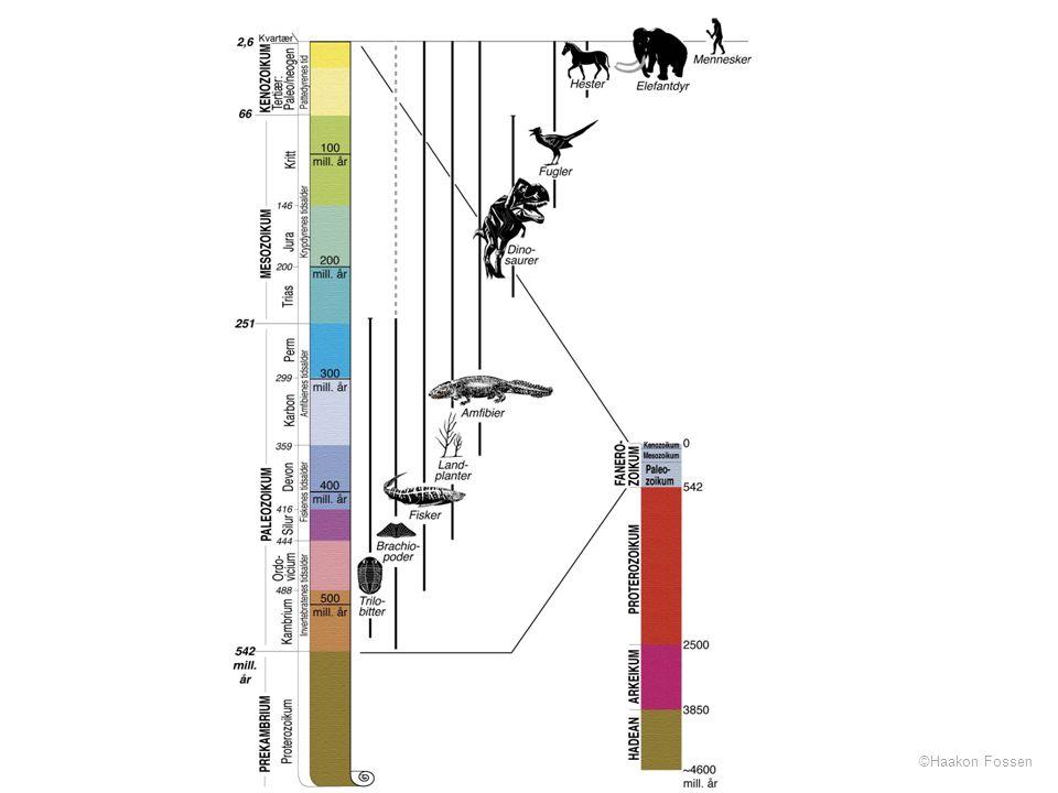 Laget fra grunnen, basert på den internasjonale stratigrafiske komites (ICS's) tidsskala.