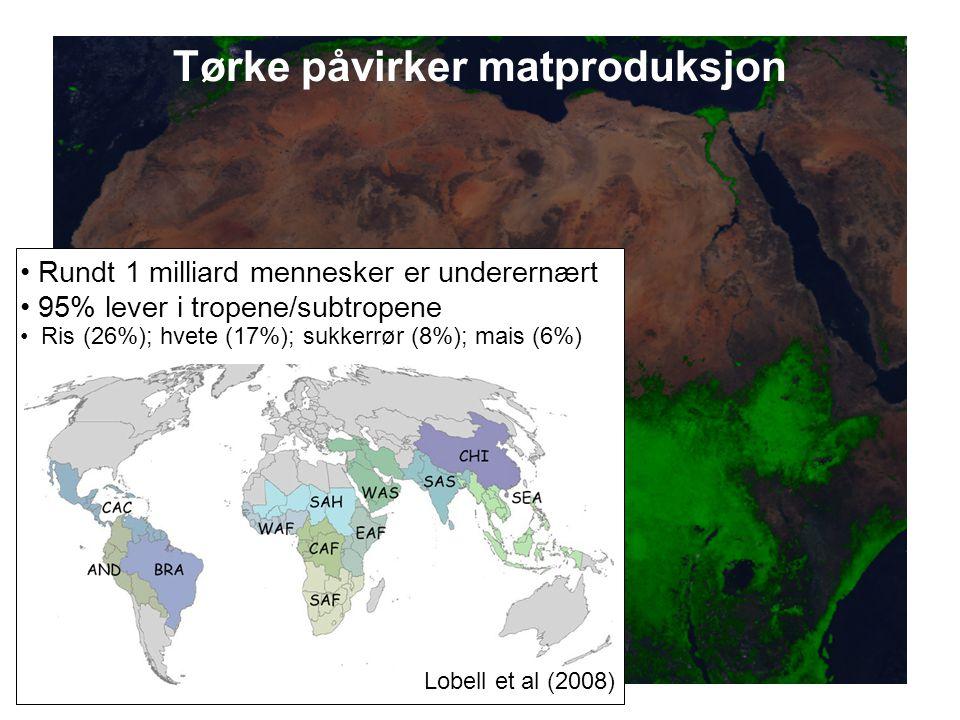 Tørke påvirker matproduksjon