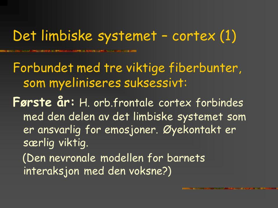 Det limbiske systemet – cortex (1)