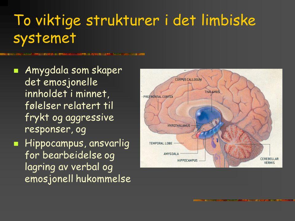 To viktige strukturer i det limbiske systemet