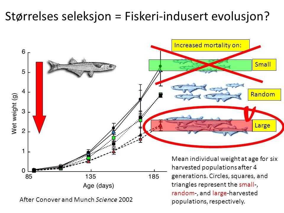 Størrelses seleksjon = Fiskeri-indusert evolusjon