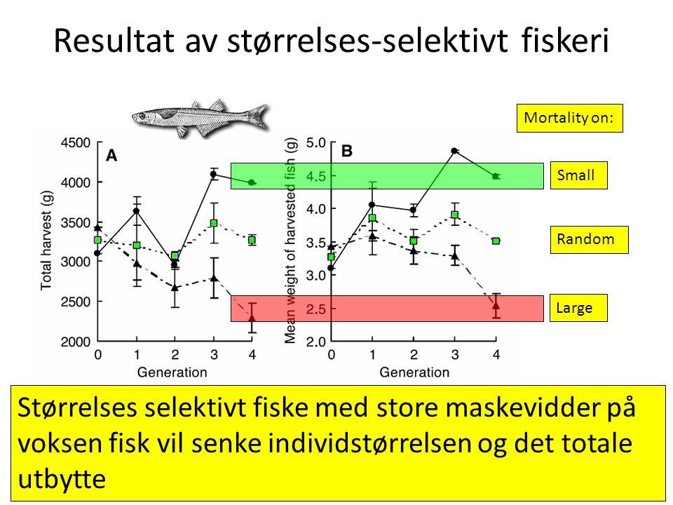 Resultat av størrelses-selektivt fiskeri