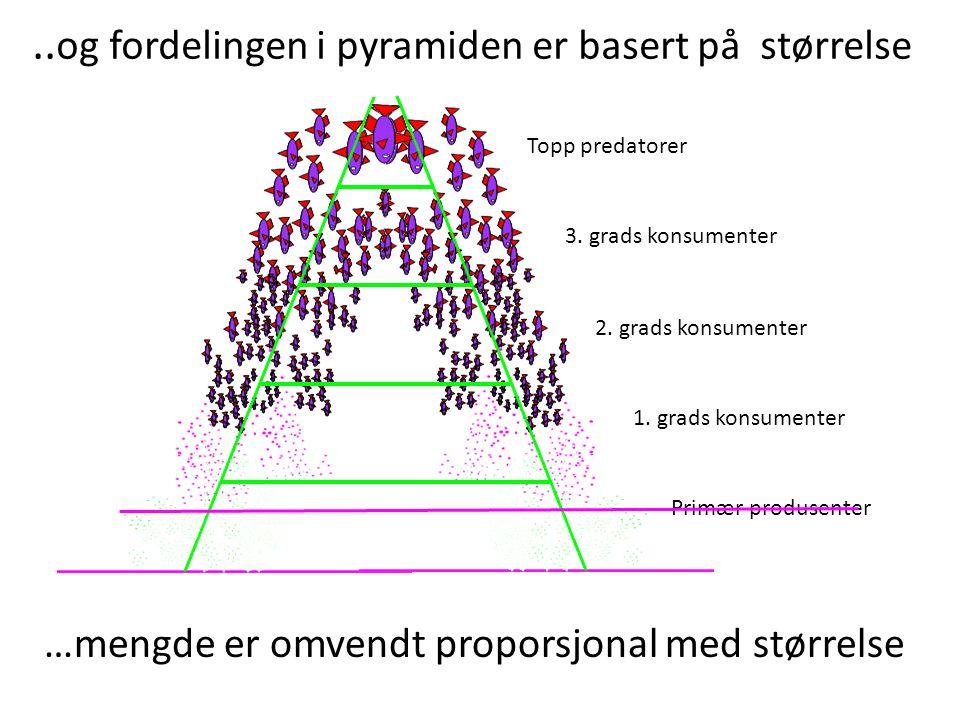 ..og fordelingen i pyramiden er basert på størrelse