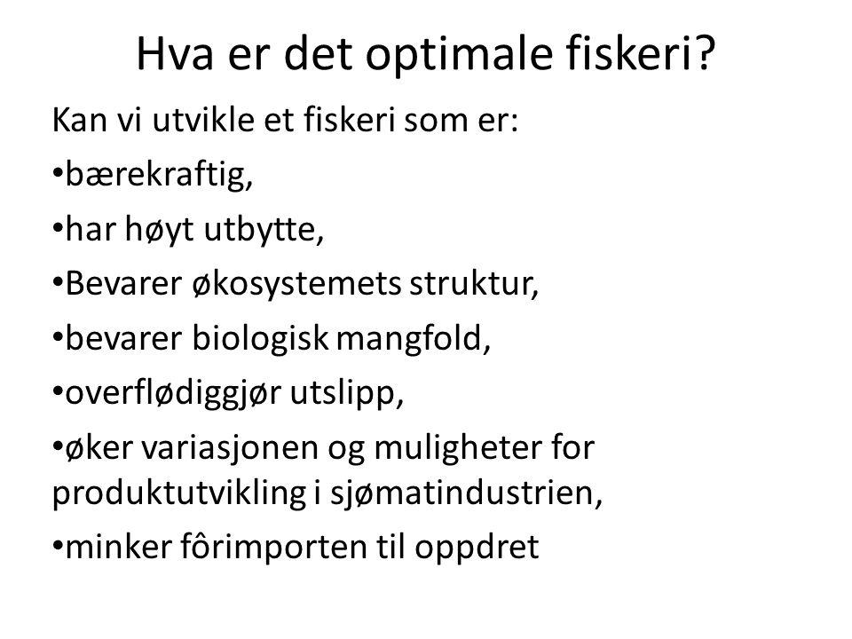 Hva er det optimale fiskeri
