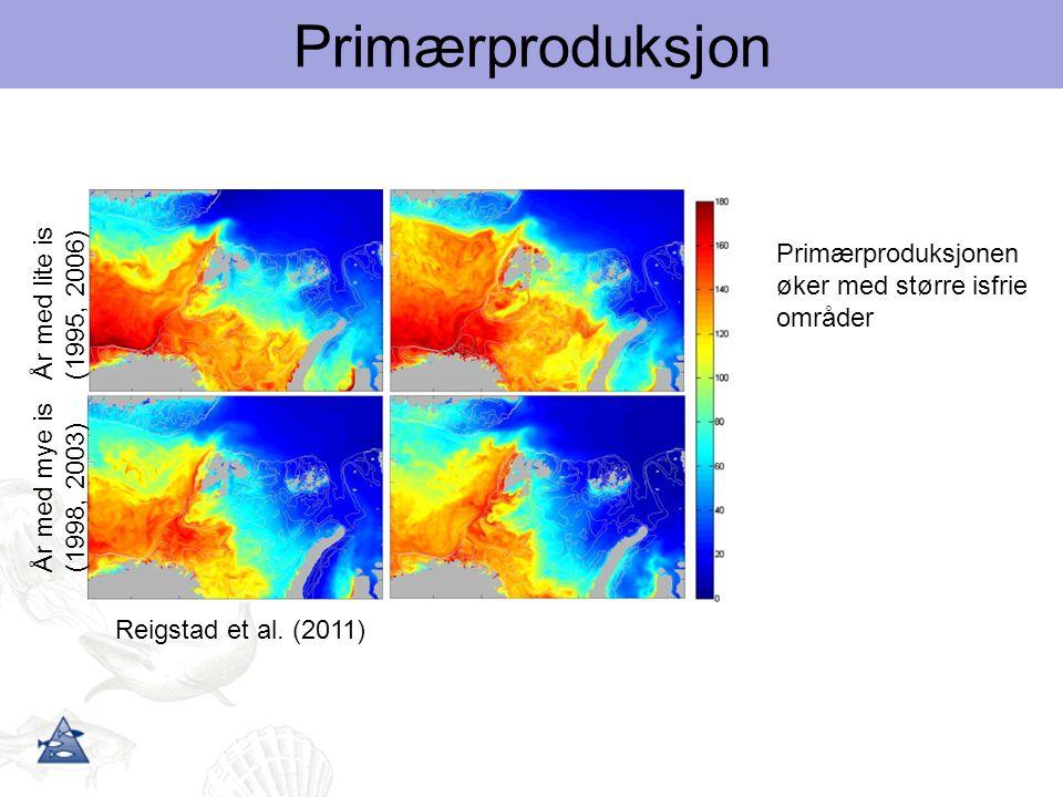 Primærproduksjon Primærproduksjonen År med lite is (1995, 2006)
