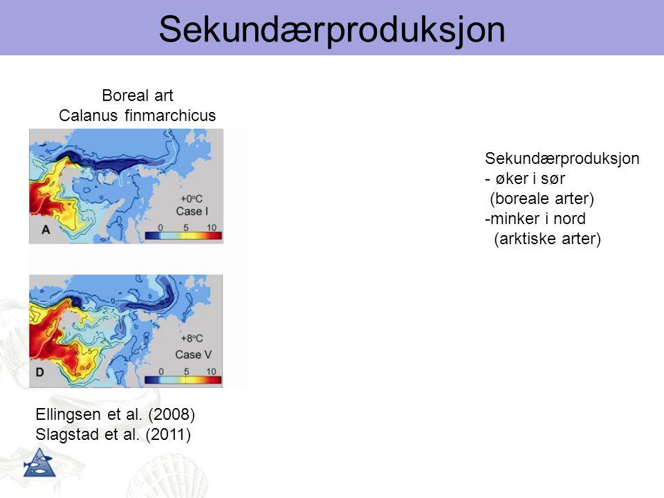 Sekundærproduksjon Arktisk art Calanus glacialis Boreal art