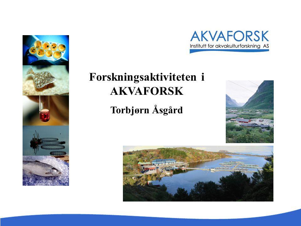 Forskningsaktiviteten i AKVAFORSK