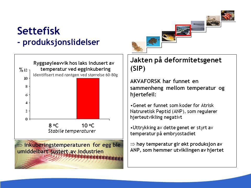 Settefisk - produksjonslidelser