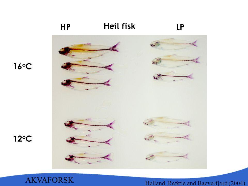 Heil fisk HP LP 16oC 12oC AKVAFORSK