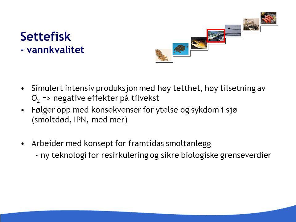 Settefisk - vannkvalitet