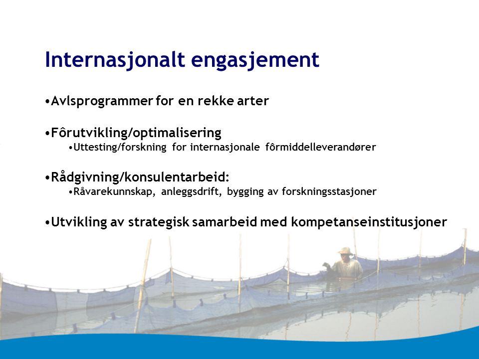 Internasjonalt engasjement