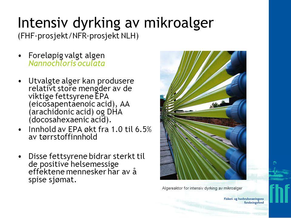 Intensiv dyrking av mikroalger (FHF-prosjekt/NFR-prosjekt NLH)