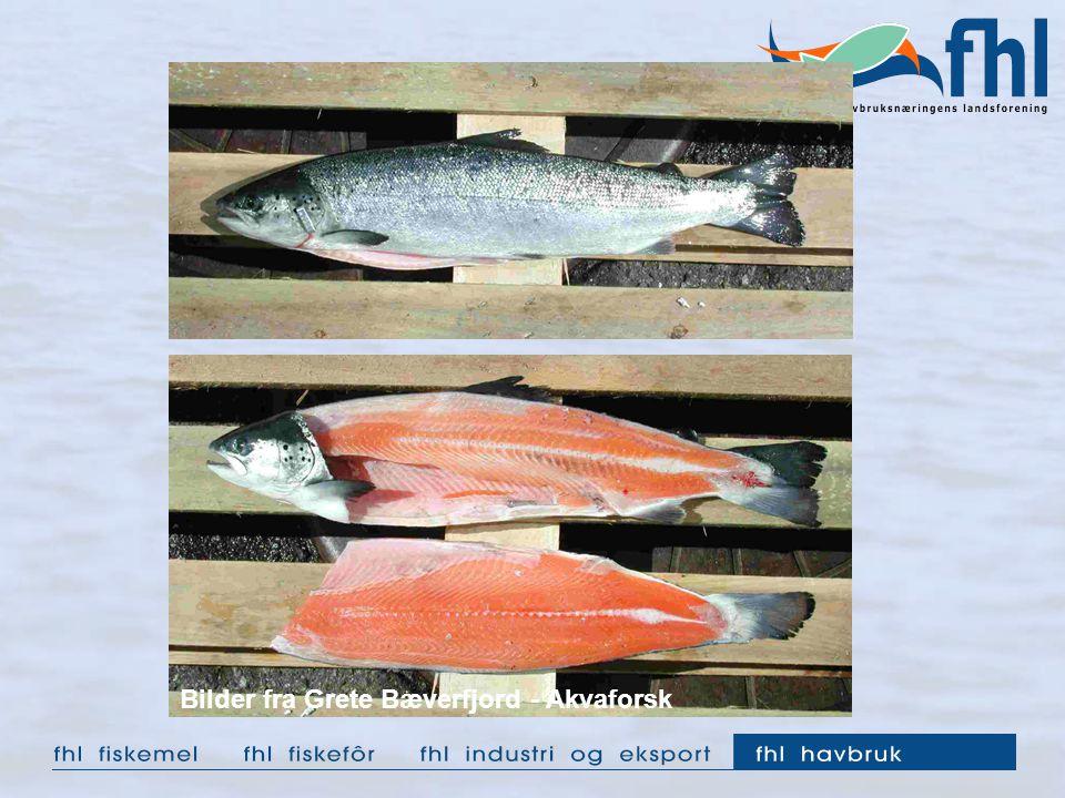 Bilder fra Grete Bæverfjord - Akvaforsk