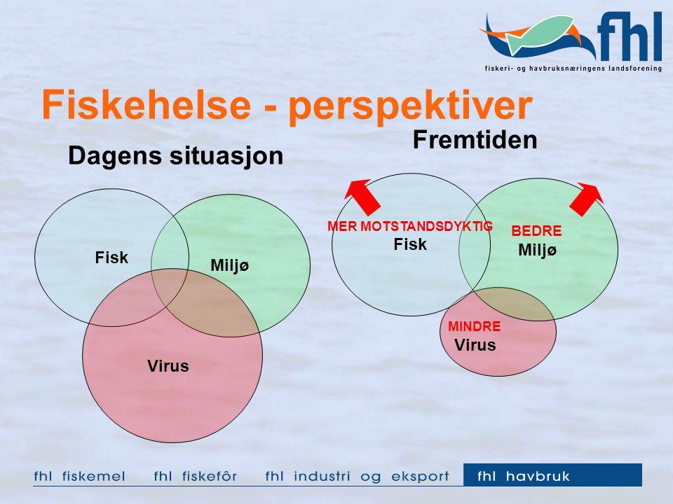 Fiskehelse - perspektiver