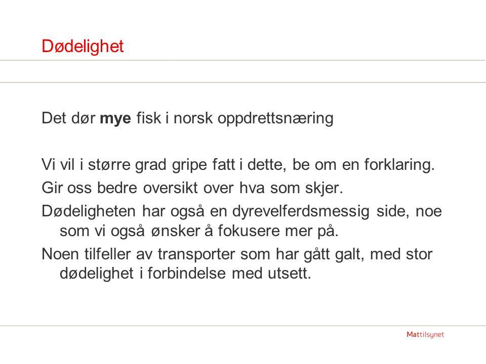 Dødelighet Det dør mye fisk i norsk oppdrettsnæring