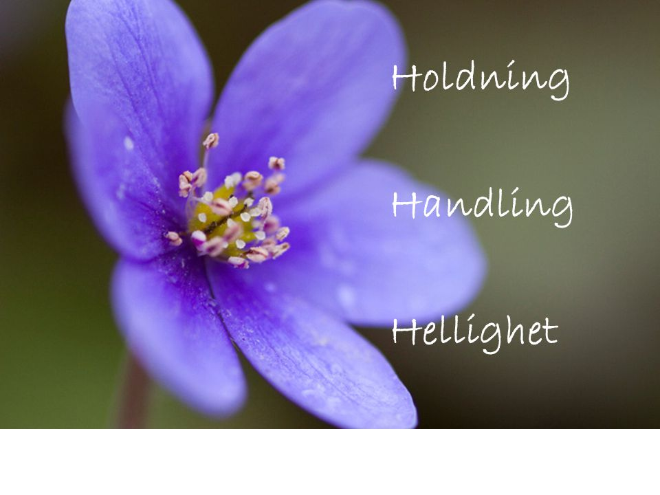 Holdning Handling Hellighet