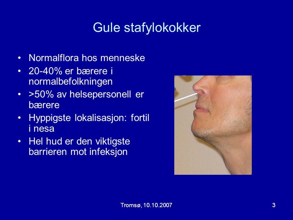 Gule stafylokokker Normalflora hos menneske