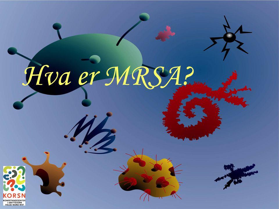 Hva er MRSA Bodø, 26. sept 2007