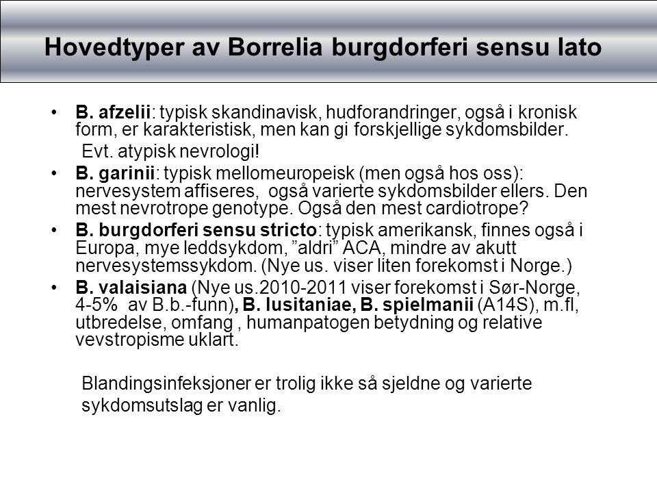 Hovedtyper av Borrelia burgdorferi sensu lato