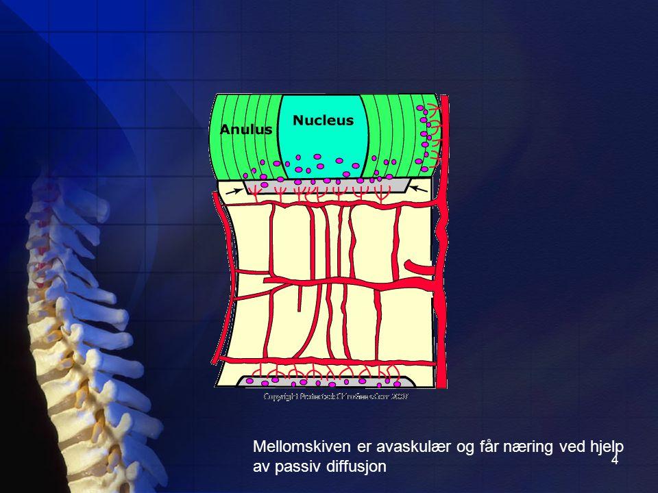 Mellomskiven er avaskulær og får næring ved hjelp av passiv diffusjon