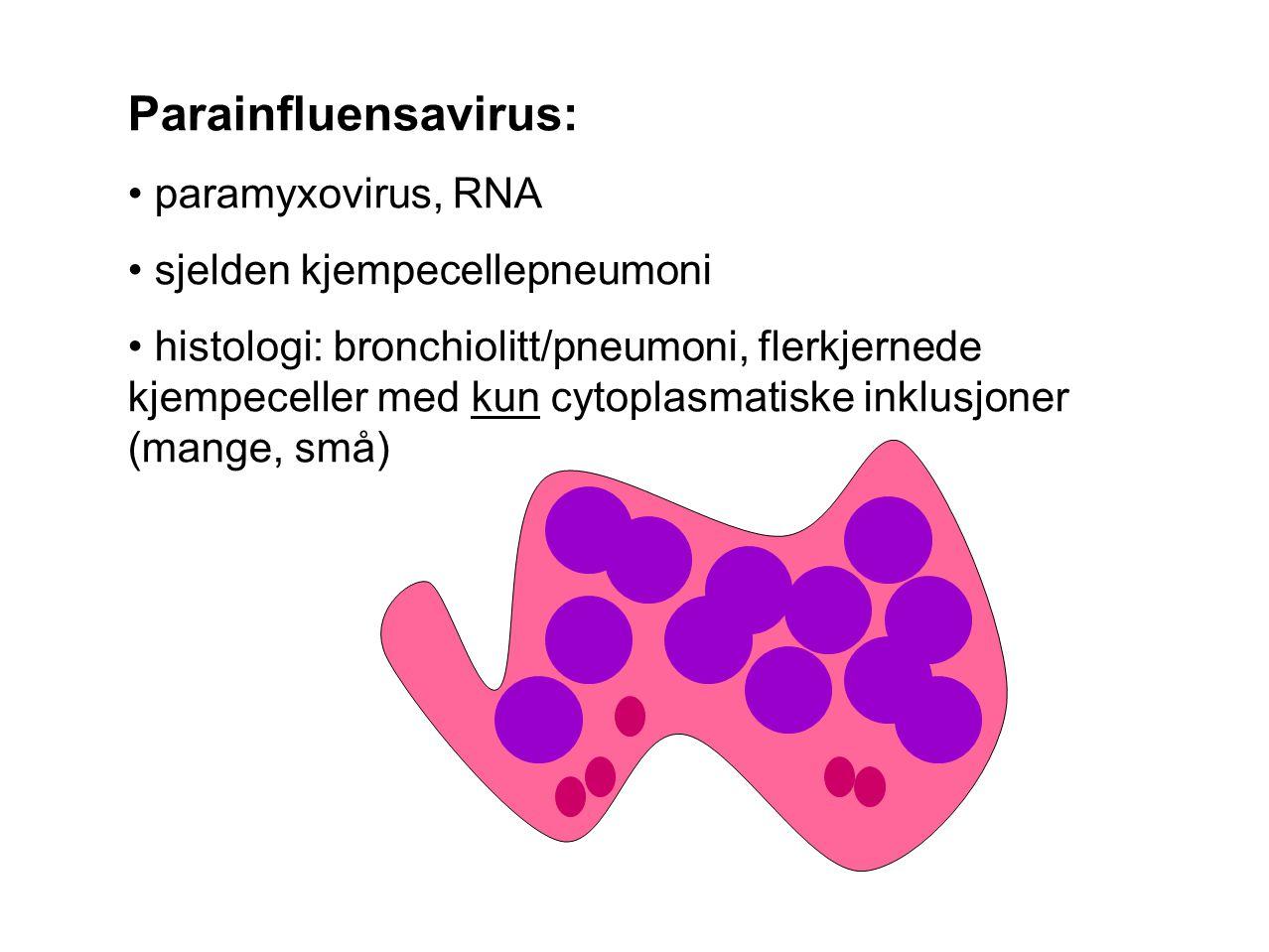 Parainfluensavirus: paramyxovirus, RNA sjelden kjempecellepneumoni
