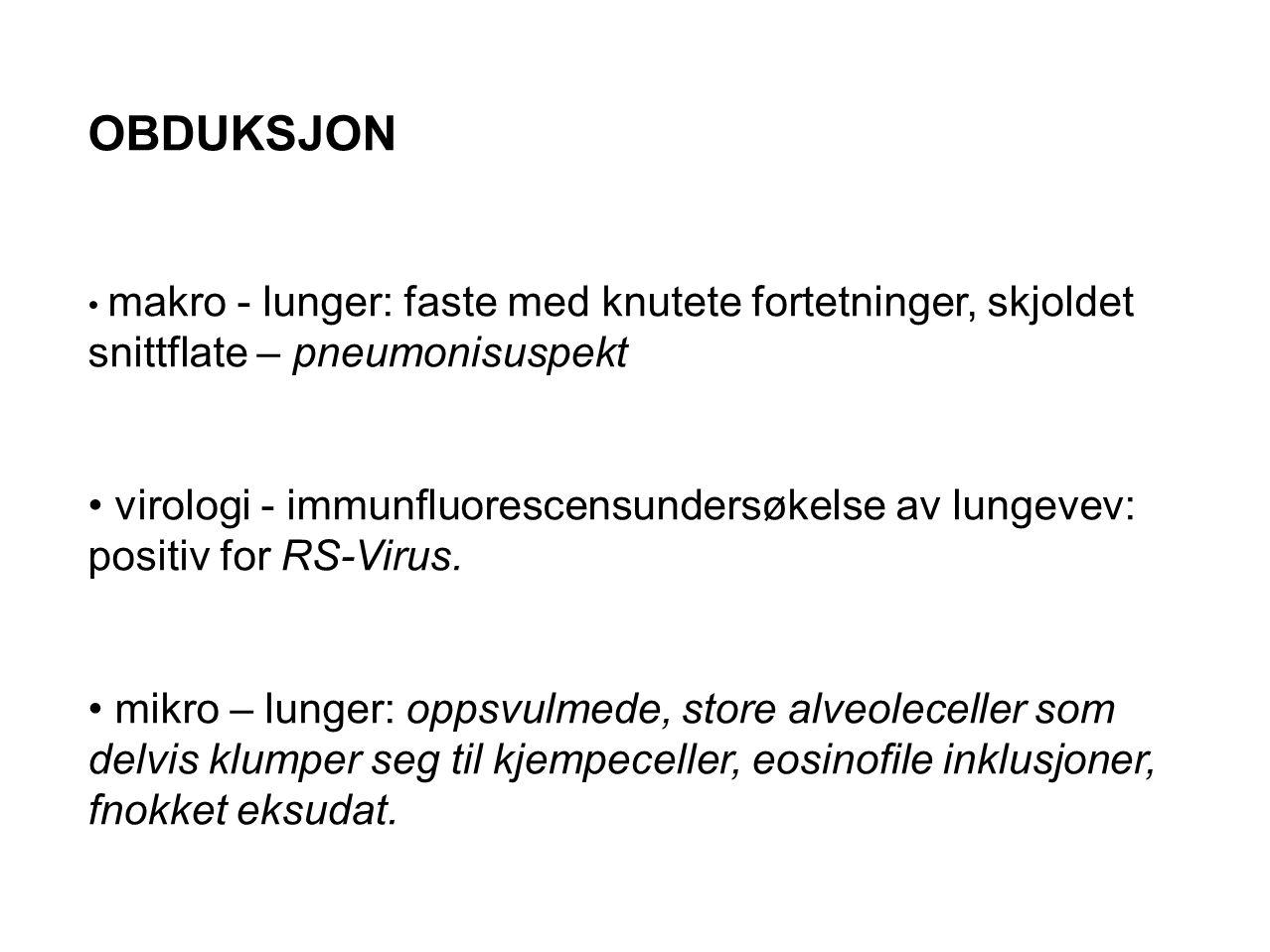 OBDUKSJON makro - lunger: faste med knutete fortetninger, skjoldet snittflate – pneumonisuspekt.