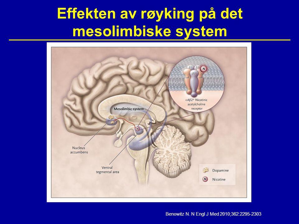 Effekten av røyking på det mesolimbiske system