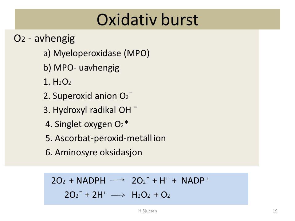 Oxidativ burst O2 - avhengig a) Myeloperoxidase (MPO)