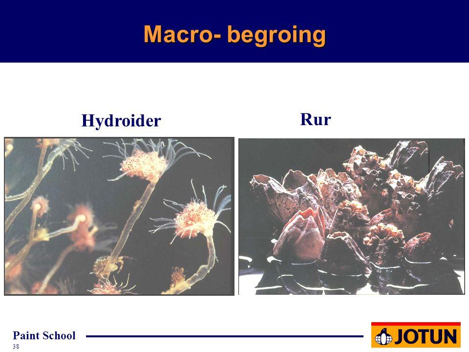 Macro- begroing Hydroider Rur CD 1545 nr. 5 CD 1545 nr. 12